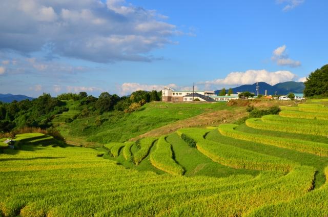 お米の栽培方法にはいろいろ種類があるのですか?