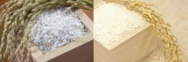 うるち米ともち米の違いはなんですか?
